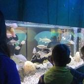 Zemědělské muzeum - voda, ryby