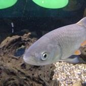 Zemědělské muzeum - ryby