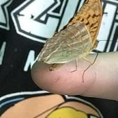Petr s motýlem