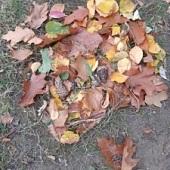 Draci z barevného podzimního listí