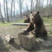 U medvědů - Kuba s Matějem